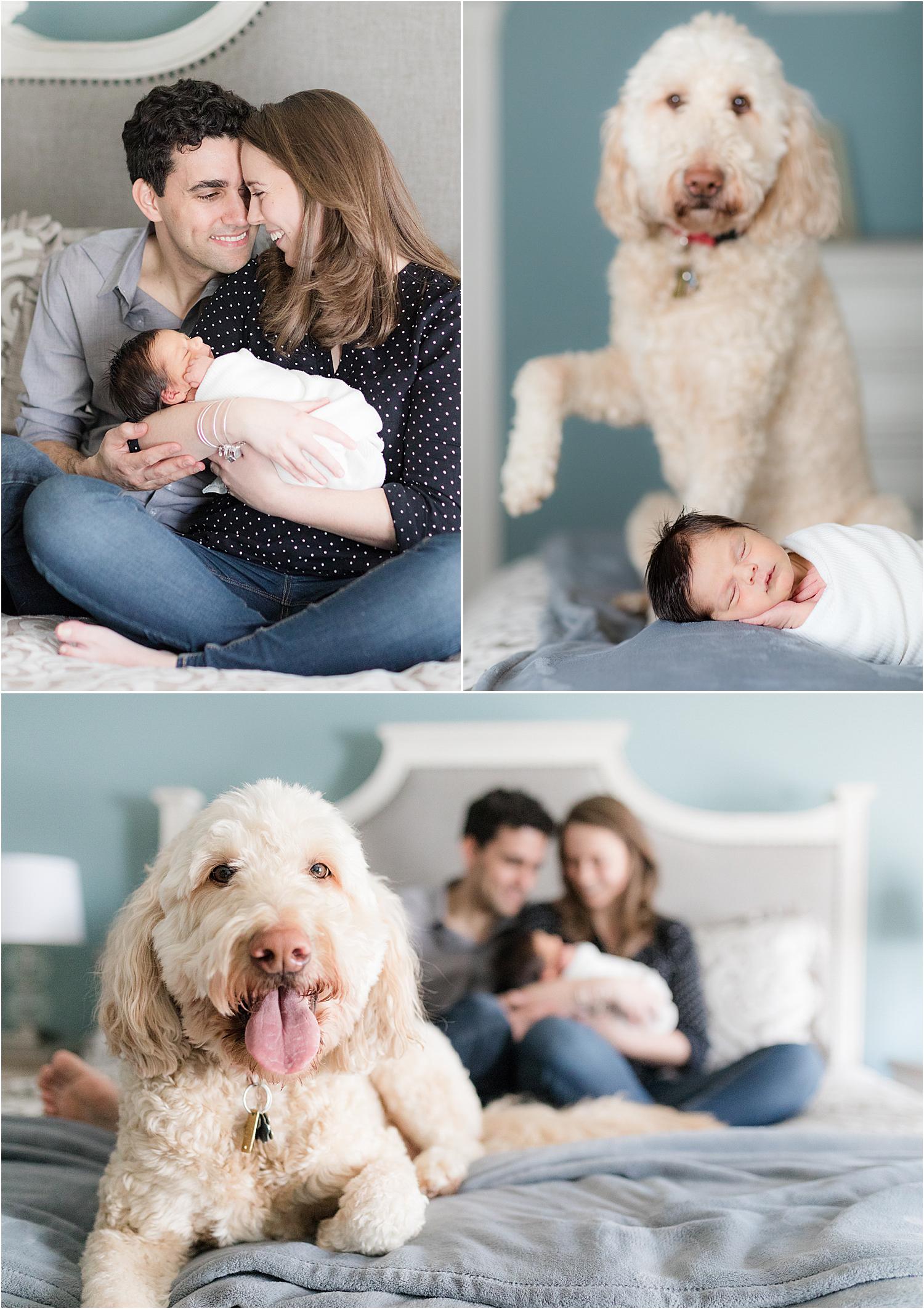 family-newborn-photos-with-a-dog