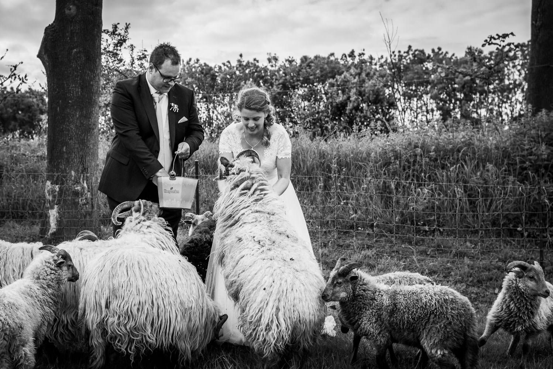 Bruidsfotografie in Bergen op Zoom, kerkelijk huwelijk in de Peperbus in Bergen op Zoom, festivalparty bij Hoeve Hildernisse in Bergen op Zoom.