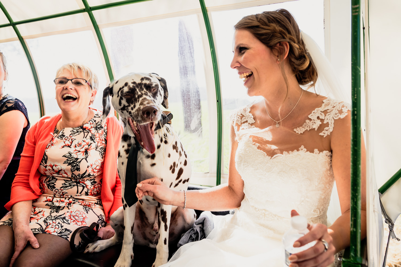 huifkar-hond-bruid-dieren.jpg