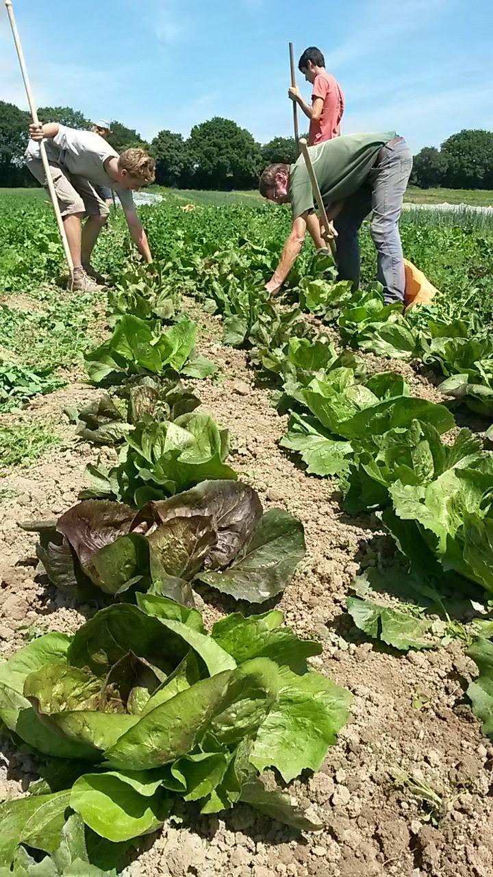 Biodynamic Community Farming