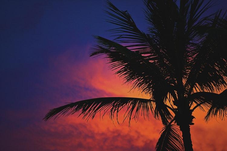 Palm tree stock image.jpg