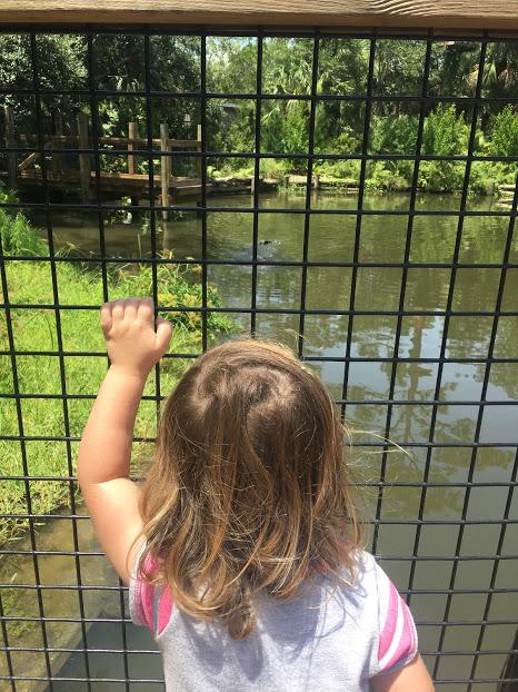 O alligator zoo.JPG