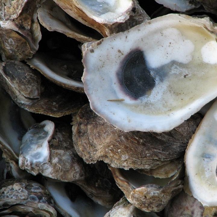 oysters-269471_960_720.jpg