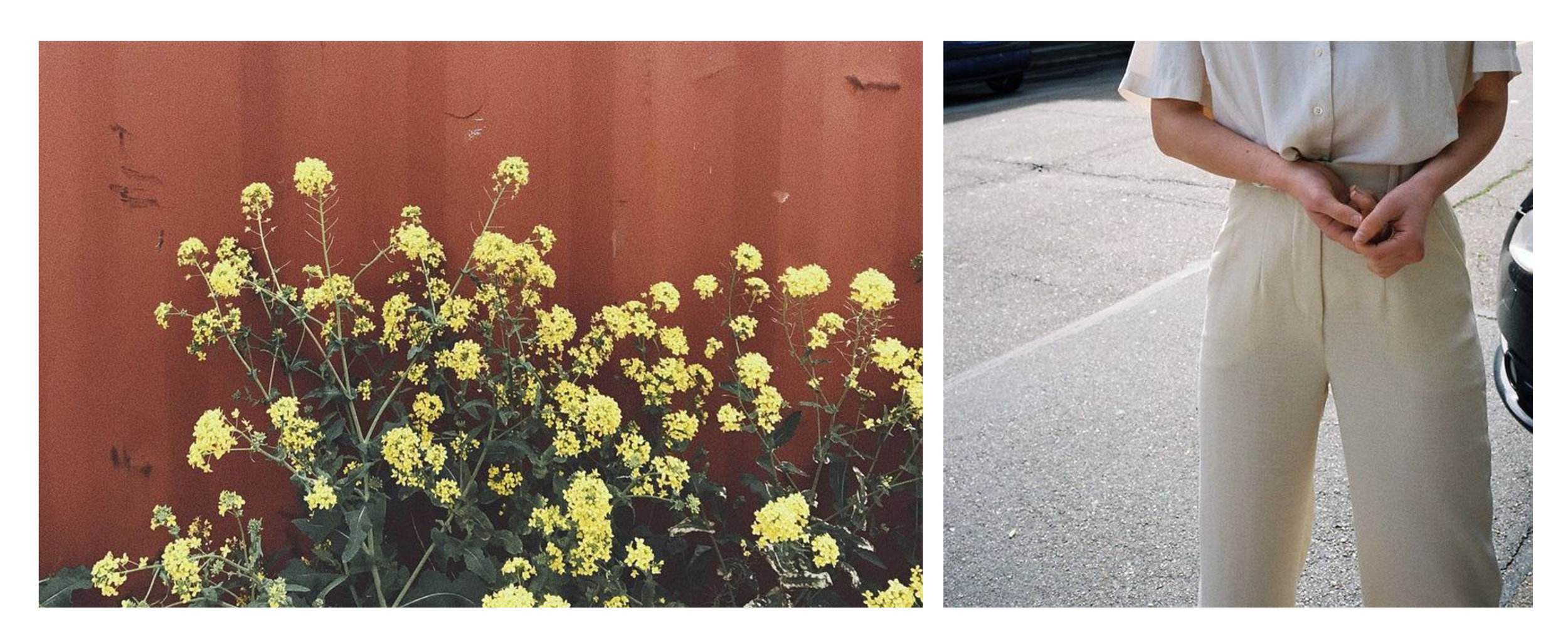 Picture Left - taken in Cononley of the weeds growing beside an old steel shipment container, right image via Pinterest