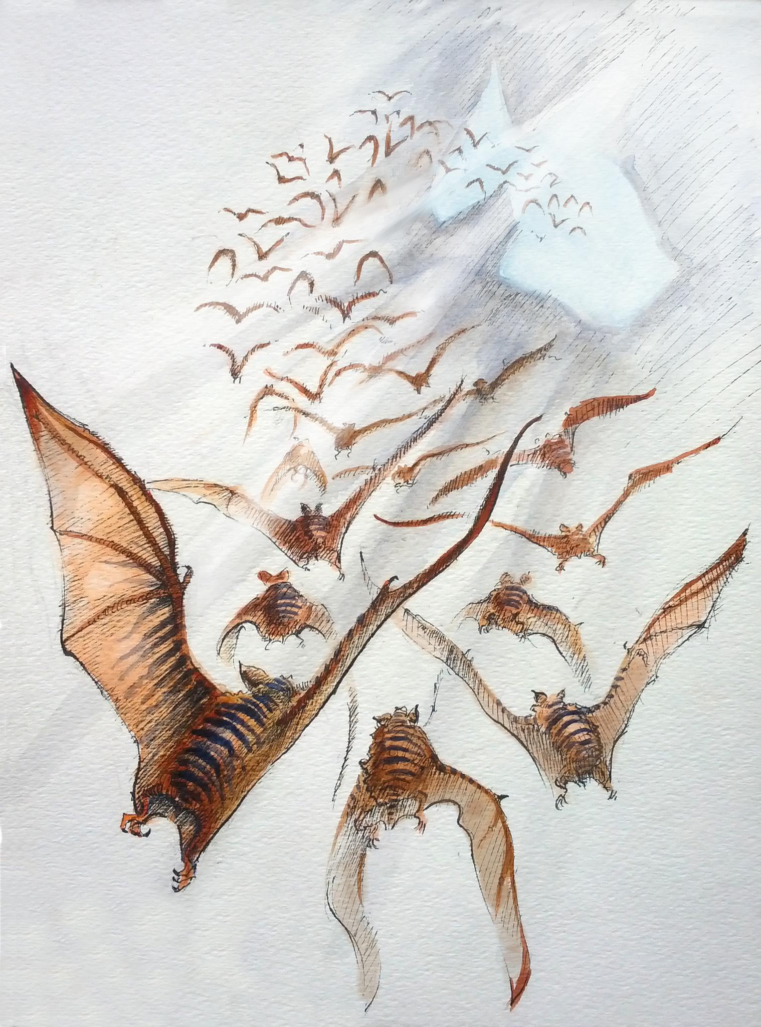 kavarian-tiger-bat-spaceotters.jpg