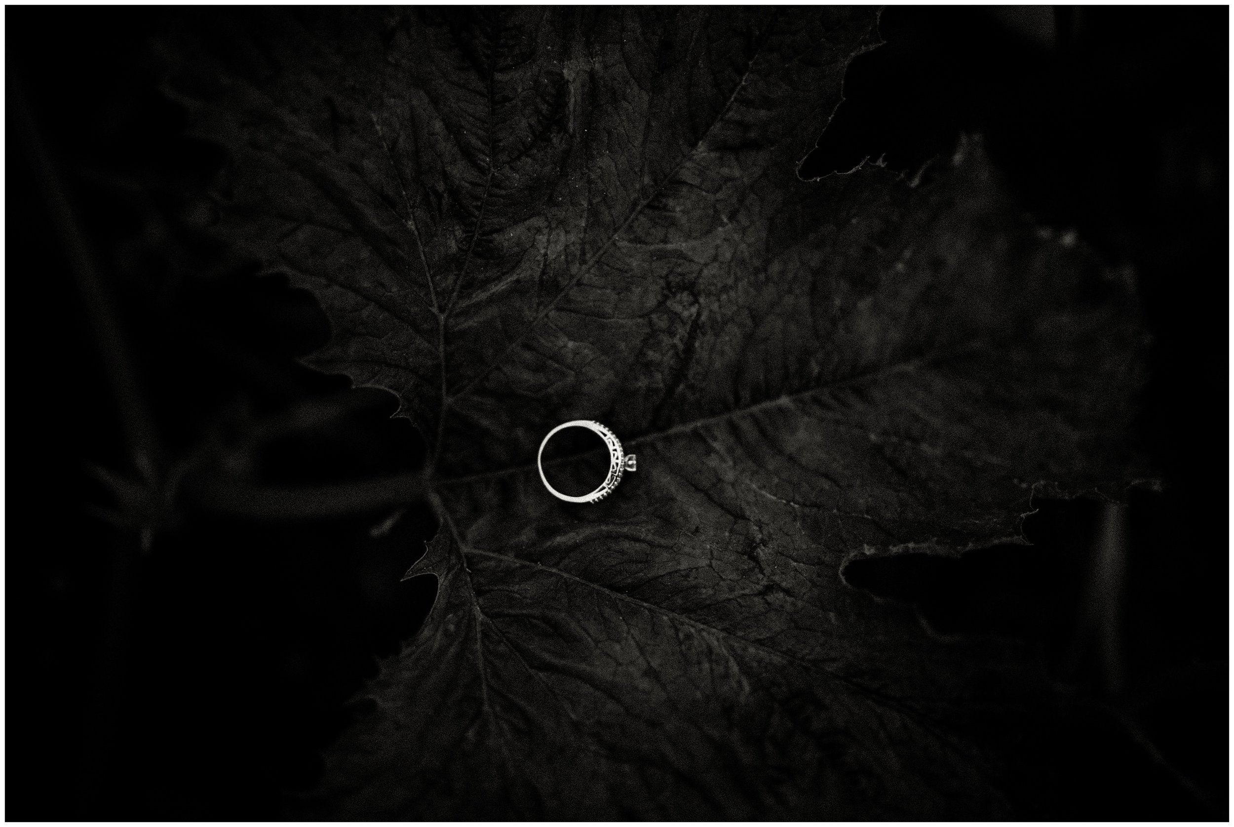 Alex + Taylor   Engaged #kyleepaigephotography_1679.jpg