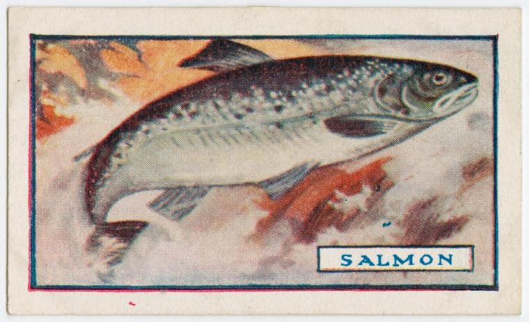 George Arents Collection, The New York Public Library.  The salmon.