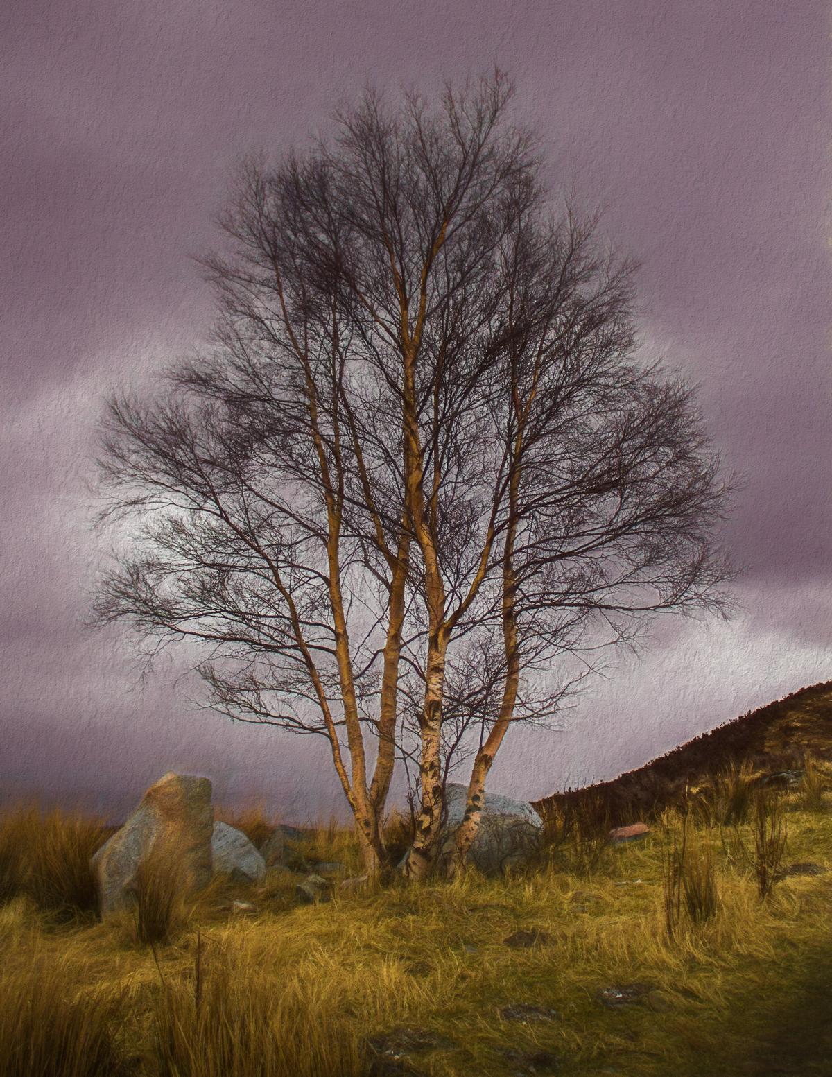 scotland_tree1200.jpg