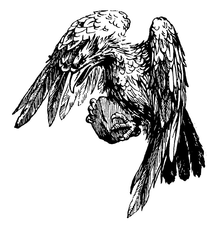 harrytheaker_eagle.jpg