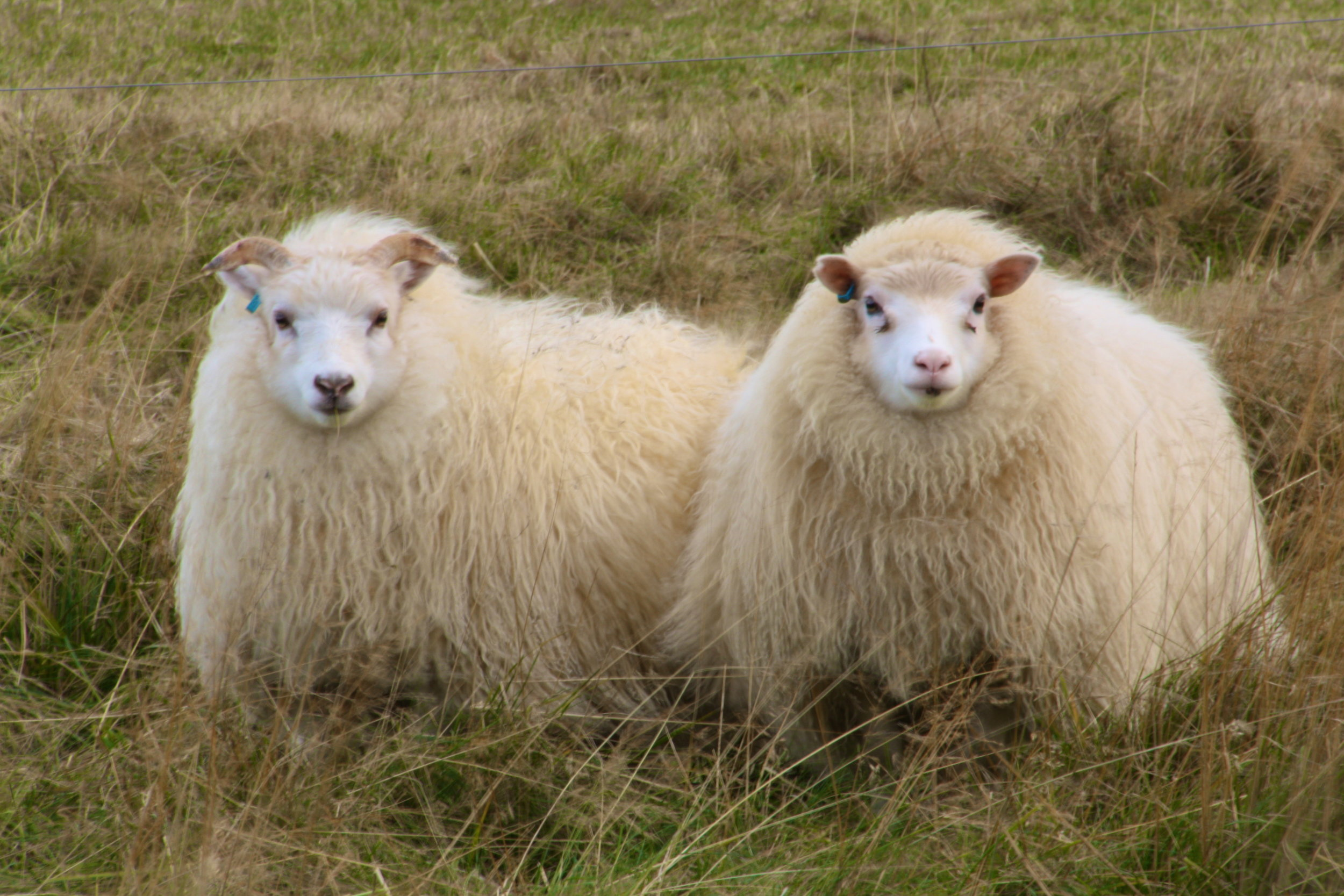 photo courtesy of woolmakerlane.com