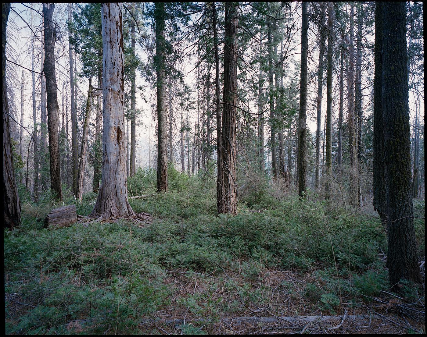 Deborah_Farnault_Sequoia_2018_09.jpg