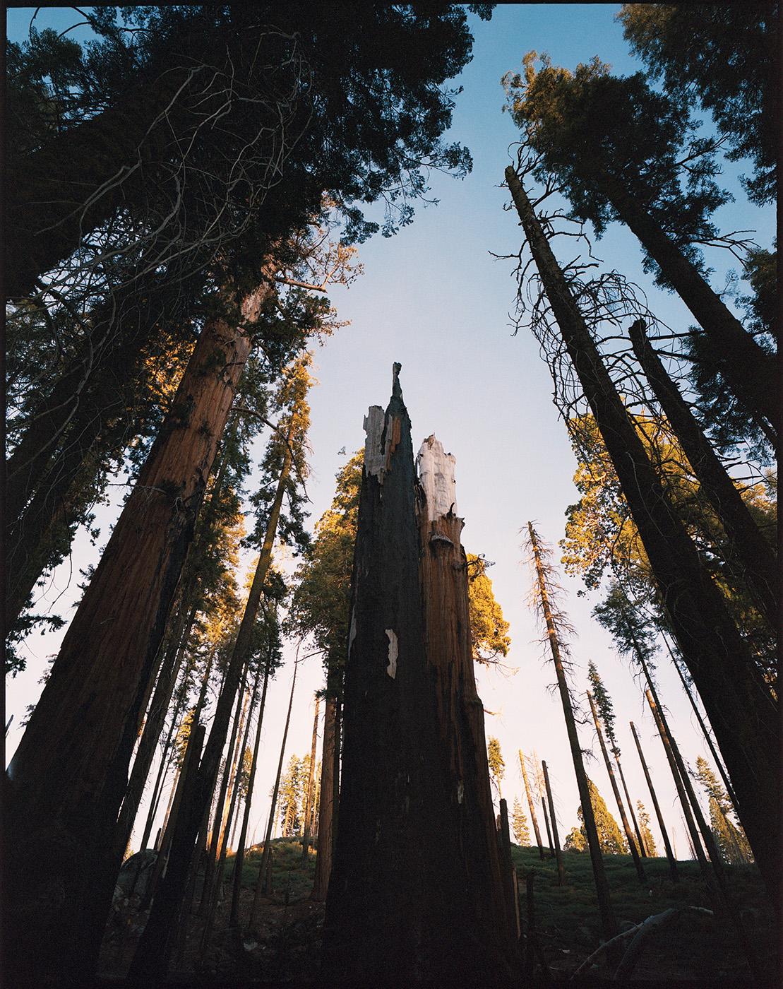 Deborah_Farnault_Sequoia_2018_07.jpg