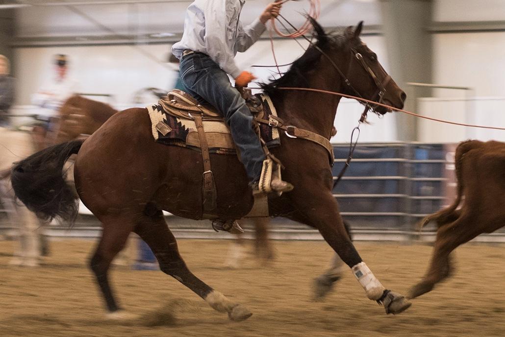 Deborah_Farnault_Wyoming_Sheridan_Rodeo_2016_DSC_6232_IG.jpg