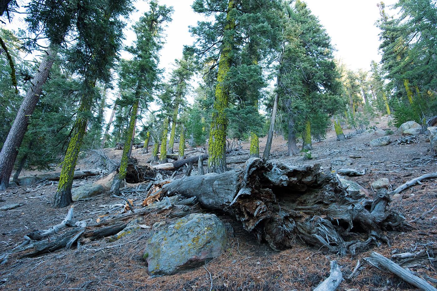 Deborah_Farnault_Sespe_Wilderness_CA_2016_DSC_6000.jpg
