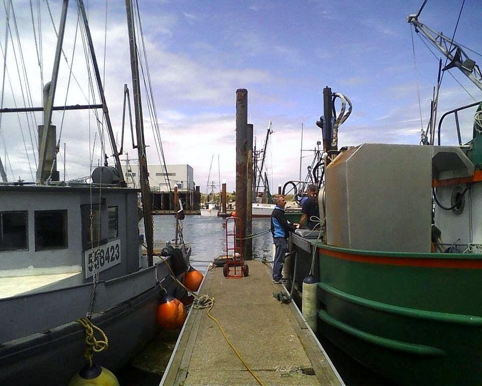 lord-bennetts-picking-up-fresh-prawns.jpg
