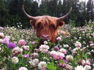 taurus-flowers.jpg
