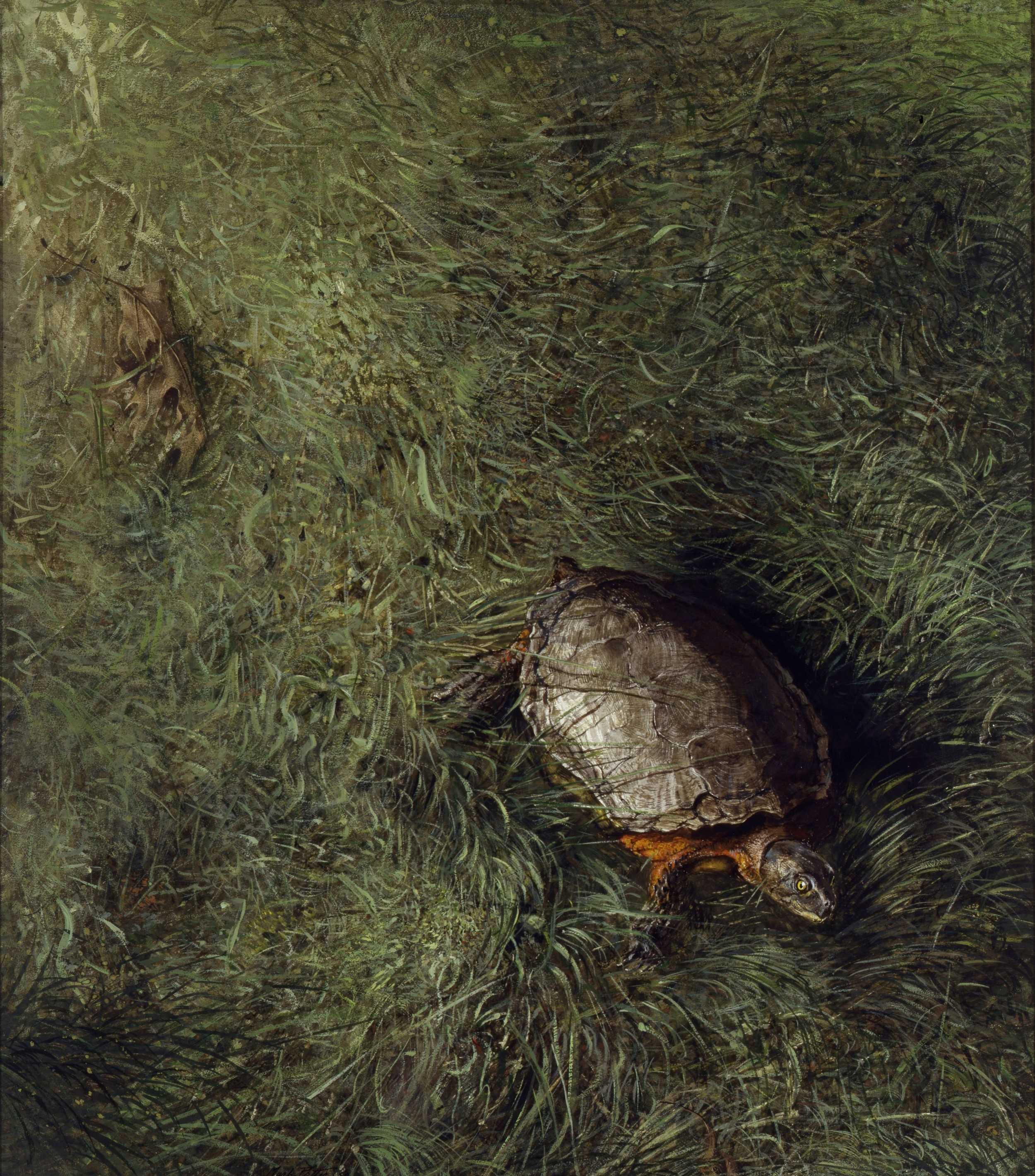 Turtle.      1964, watercolor drybrush. 21.3 x 18.7 inches. Collection of The Taft School.