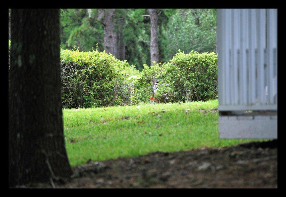 lawn+care+tallahassee-min.jpg