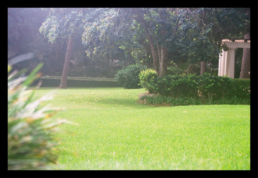 Lawn care is about providing an environment that supports the natural landscape that is your yard.
