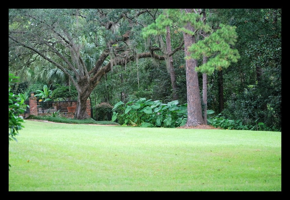 Tallahassee+lawn+care+edging-min.jpg
