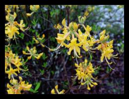 nativeplantings(2)FRAMED-min.png