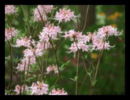 nativeplantings(3)FRAMED-min.png