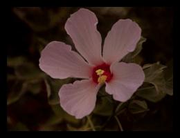 nativeplantings(4)FRAMED-min.png
