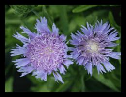 nativeplantings(5)FRAMED-min.png