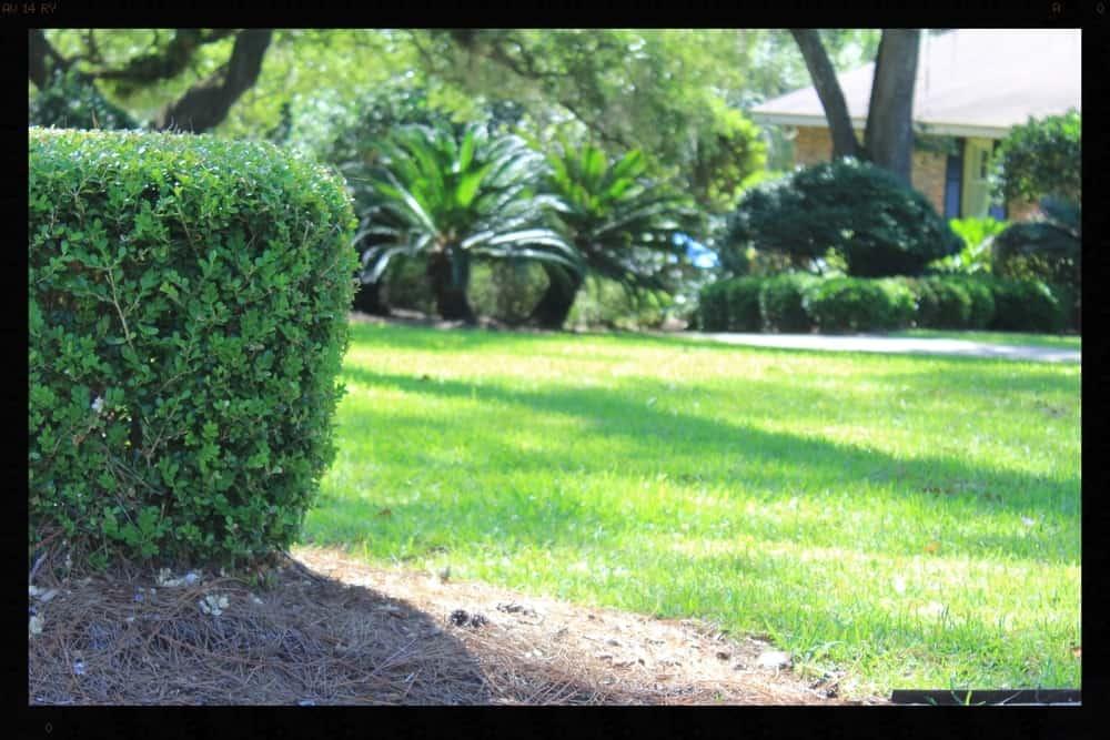 Tallahassee+Lawn+Care+1+-min-min.jpg