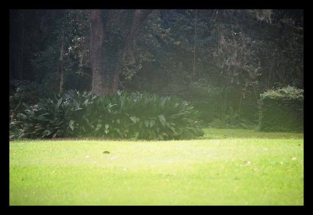 Tallahassee+lawn+care+debris+removal-min-min.jpg