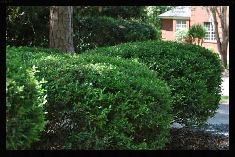 Tallahassee+Lawn+Care+4-min-min.jpg