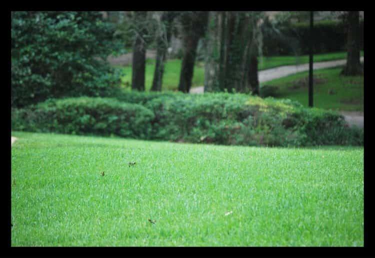 Tallahassee+lawn+care+Florida-min-min.jpg
