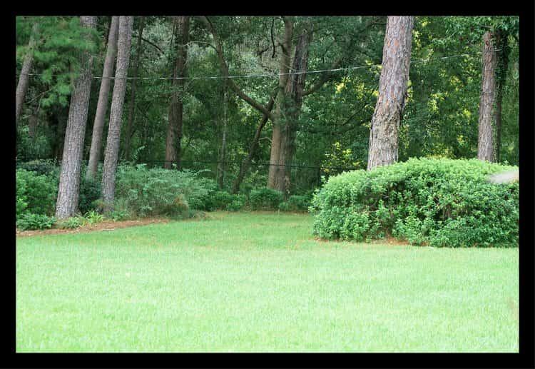 Tallahassee+Lawn+Care+mowing+turf+area-min-min.jpg