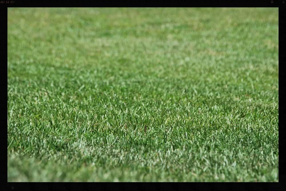 Tallahassee+Lawn+Care+2-min-min.jpg