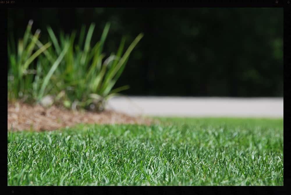 Tallahassee+Lawn+Care+3+(1)-min-min.jpg