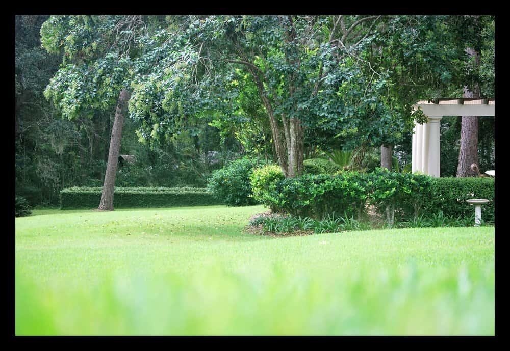 Tallahassee+Lawn+Care+trimming+shrubs-min-min.jpg