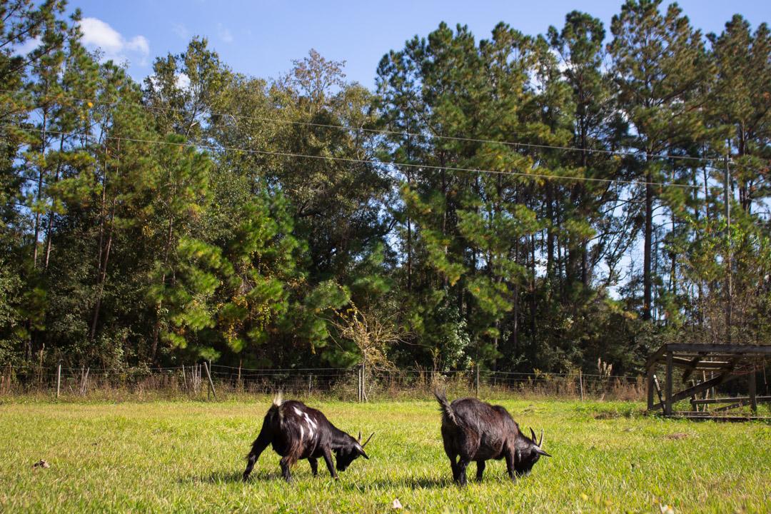 Tallahassee Animal Sanctuary