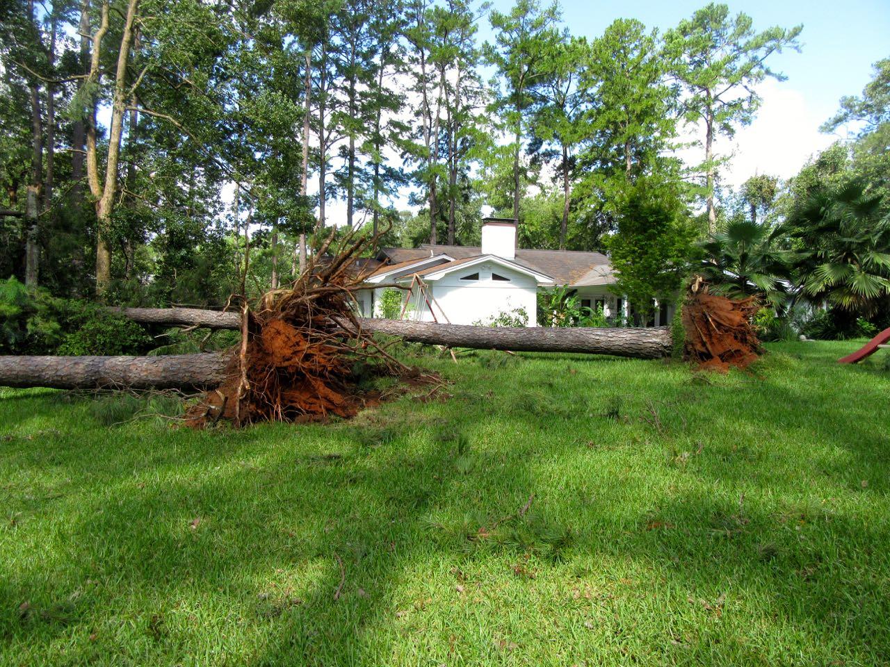 Tallahassee Hurricane Lawn Damage.jpg