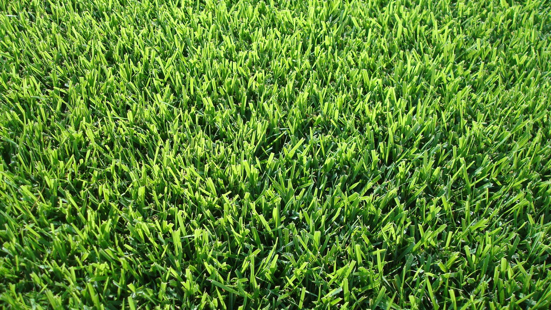Zoysia Grass Dickerson Landscaping