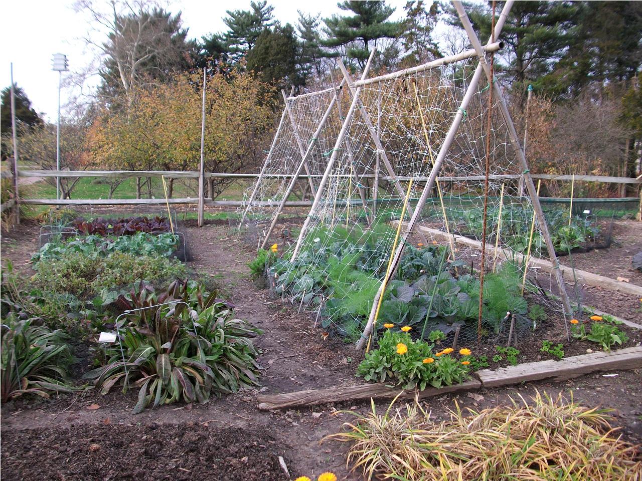 Organic Vegetable Garden.jpg