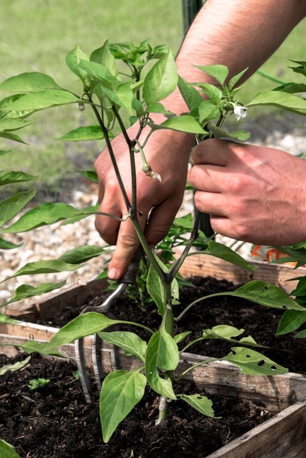 Planting a thank you.jpg