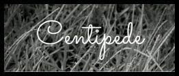 Centipede Grass.png