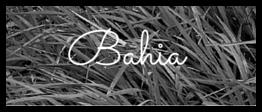 Bahia Grass.png