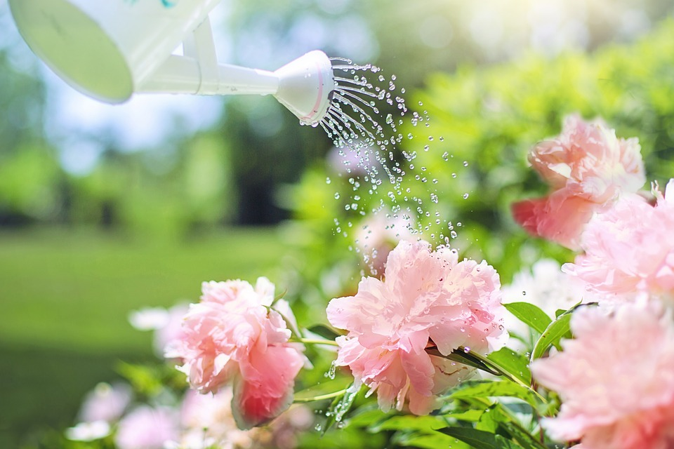 Watering Plants in Tallahassee Florida.jpg