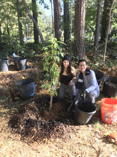 Sydney Sunna (left) and Thomas Shiu (right) finish making the ring of soil around the sapling.