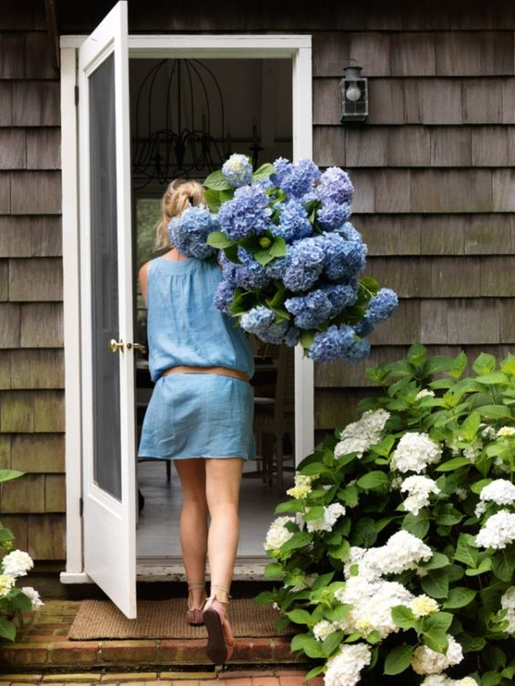 hydrangeas-house-caitlin elizabeth james.jpg