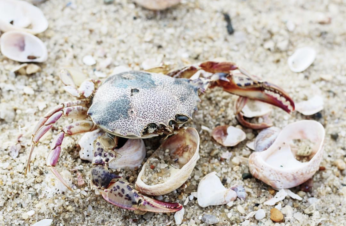 best-place-to-find-sea-glass-rhode-island-caitlin-elizabeth-james-crab.jpg