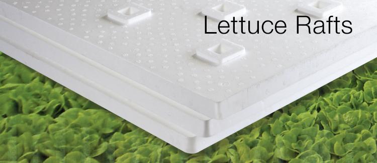 lettuceraft_1.jpg