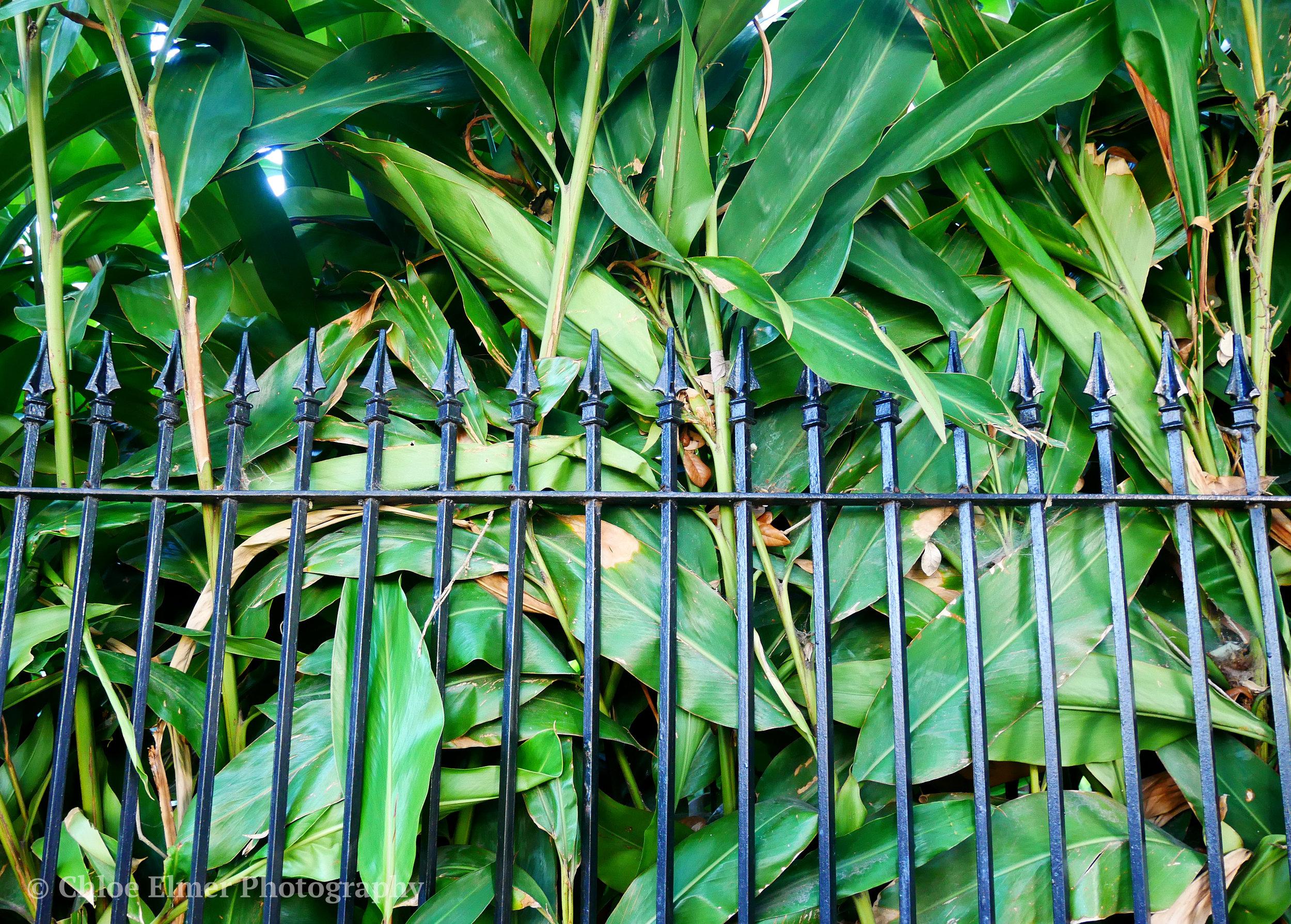 plants8.JPG