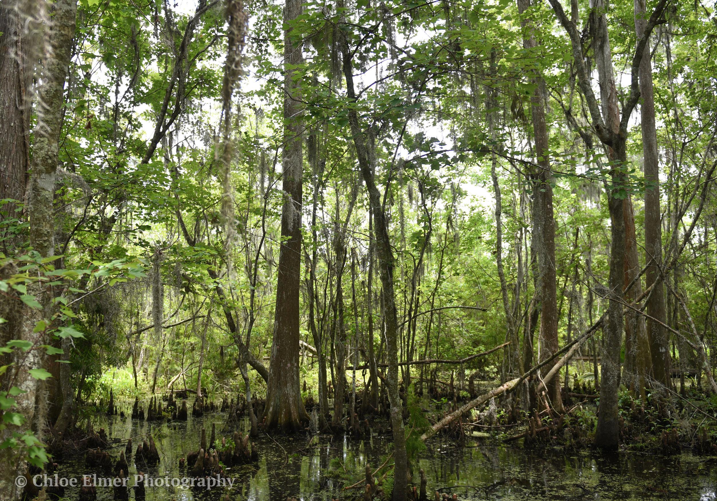 swamp2.JPG